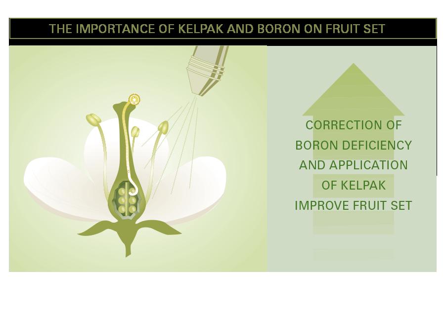 boron brochure Tekna's boron nitride nanotubes have unique properties such as  tekna  boron nitride nanotubes are really versatile  download  brochure.
